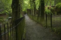 SlipperyPath (Tony Tooth) Tags: nikon d600 tamron 2470mm path pathway cobbles cobbled wet slippery slipperypath churchyard leek staffs staffordshire