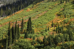 Red Meadow Lake (Forest Service - Northern Region) Tags: flatheadnationalforest montana scenic fallcolors