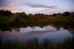 Sunrise in Suburbia Landscape 03 (The Good Brat) Tags: colorado us reflection lake pond sky clouds lavender blue trees suburbia suburban greenspace wild nature sunrise morning rosy golden light landscape