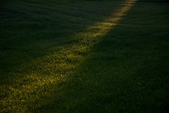 Crack of Dawn on the Lawn (The Good Brat) Tags: colorado us crackofdawn lawn light ray grass green glow suburban suburbia dew sunrise morning rosy golden nature landscape
