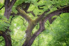Was it a Dream? (Omygodtom) Tags: outdoors tree dream nikkor natural nature d7100 dof bokeh kitlens 18105lens lightroom46 flickriver