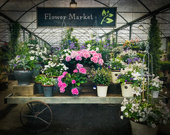 Flower Market (judy dean) Tags: 365the2019edition 3652019 day163365 12jun19 judydean 2019 burford gardencentre flowermarket stall flowers plants geraniums