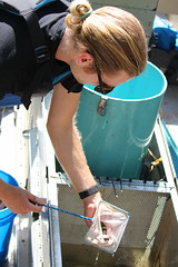 Counting Smolts