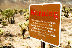 Joshua Tree 2 (mjschrems2) Tags: cholla joshua tree california state park cali desert cactus rocks cliffs mountains