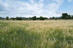 Sierra Mariola, Alcoy, juin 2019 (nicolascroce) Tags: nuage sierramariola champ nature objet blé