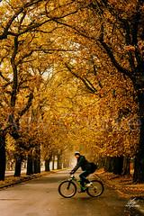 Bike (Amy Charlize) Tags: amycharlize focosocial autumn trees bike chile street streetlife foliage otoño beautiful beauty arboles urban morning