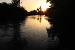 Predation Event Recorders at Sun Set