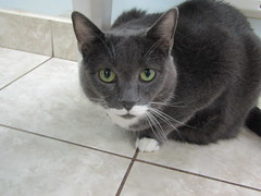 Betty Boo - 10 year old spayed female