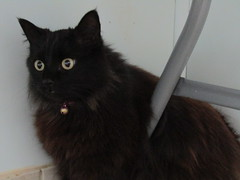 Coco - 6 year old spayed female