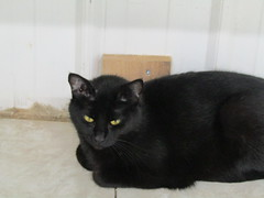 Kimmie - 5 year old spayed female