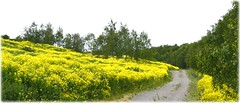Hagby Ekopark - Täby (lagergrenjan) Tags: hagby ekopark täby blommor växter