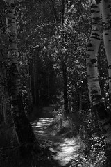Journey. In the beginning. (Listenwave Photography) Tags: histogram listenwave trees travel landscape flickrelite ngc nature manual contrast shadow dark forest journey bnw merrill foveon sigma mmode