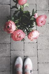 Coral Rose (Sylvia Houben) Tags: flowers peonies coral rose