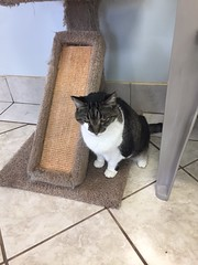 Blinky - 15 year old neutered male