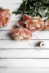 Coral rose peonies ... (Sylvia Houben) Tags: flowers peonies coral rose fading