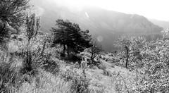 noir et blanc le matin (bernard.bonifassi) Tags: thiery bb088 06 alpesmaritimes 2019 juin printemps canonpowershotsx60hs counteadenissa