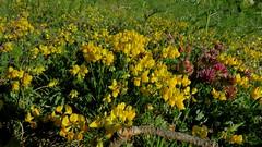 Composition des Alpes du Sud (bernard.bonifassi) Tags: thiery bb088 06 alpesmaritimes 2019 juin printemps canonpowershotsx60hs counteadenissa