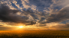 Homeland (Pásztor András) Tags: d5100 dslr nikon andras pasztor photography outside nature sunset sun light cloudy clouds wheat field sigma 1020mm