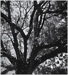Lomography (Black and White Fine Art) Tags: lomo lomography holga holga120s kodakbw400cnexp2007 kodakd76 sanjuan oldsanjuan viejosanjuan puertorico bn bw toycamera camaradejuguete camaradeplastico plasticcamera nikilverefexpro2 lightroom3