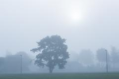 Uppsala, August 22, 2015 (Ulf Bodin) Tags: uppsala sverige landscape calm mist scandinavia outdoor quiet dimma trees summer tree august fog morning canoneos5dmarkiii canonef85mmf12liiusm uppsalalän