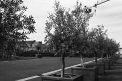 Parking (christophe.vinchon) Tags: arbres parking grue