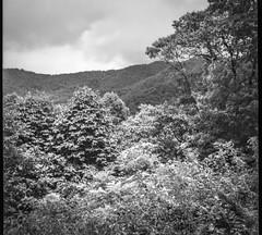 mountain vista, Lakey Gap Heights, Black Mountain, NC, Bencini Koroll, Ilford FP4+, HC-110 developer, 6.10.19 (steve aimone) Tags: vista mountain mountains lakeygapheights blackmountain red northcarolina bencini bencinikoroll ilfordfp4 hc110developer mediumformat italian filmcamera 120 120film film monochrome monochromatic blackandwhite landscape