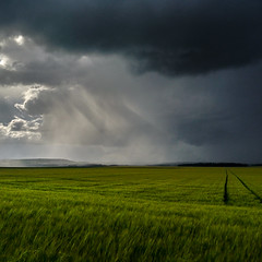 Ciel froissé (PhlippeC.) Tags: square carré clouds nuages champ blé vert