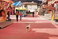 Funfair 2019 (sirio174 (anche su Lomography)) Tags: cane dog pippo funfair lunapark como italia italy primavera spring divertimento fun canonav1 lomographycn100