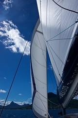 IMGP6498 Sails (Claudio e Lucia Images around the world) Tags: sails catamaran boat sea wind sky bluesky mauritius blackriver pentax pentaxk3ii pentax18135 pentaxart pentaxlens pentaxcamera