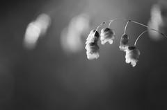 Still life (Capturedbyhunter) Tags: fernando caçador marques fajarda coruche ribatejo santarém portugal pentax k5 smc fa 100mm f28 macro smcfa10028mqcro pentaxfa100mmf28macro monocromático monochrome preto e branco black white pentaxart