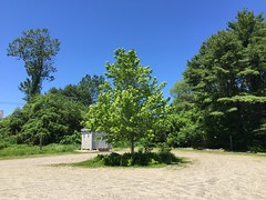 A Solitary Witness (77ahavah77) Tags: spring tree landscape outside nature blue sky maine solitary solitude alone