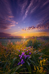 They Speak Without a Sound or Word (Phil~Koch) Tags: life mood emotions country rural outdoors colors living heaven weather horizons lines landscape art meadow sky sunset clouds scenic vertical photography office portrait serene morning dawn nature natural environment inspired inspirational season beautiful hope love joy dramatic unity trending popular canon fineart arts shadow sun sunrise light peace wisconsin shadows endless earth sunlight horizon pastel spring green blue grass field lavender purple flower