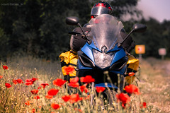 (constellationw) Tags: moto motobike motocycle adventurerider adv mototravel yamaha xj6 travel canon canonukraine ukraine маки украина
