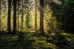 forest series #362 (Stefan A. Schmidt) Tags: forest tree trees germany leaf sun beam