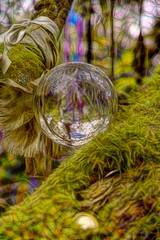Clootie Tree (Antony Mitchell) Tags: clootie coins clootietree madron madronclootietree sacredplace holy spiritual crystalball sphere glassball decoratedtree pilgrimage cloth sd1merrill placeofworship makeawish hope faith lensball fractalius fractaliusimages holyplace