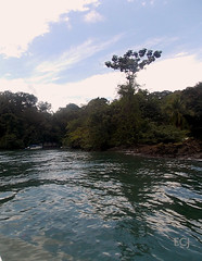 Entrando a una caleta en Bahía Drake, Osa/ Going into a cove at Bahía Drake, Osa canton (vantcj1) Tags: bahía mar caleta oceáno costa vegetación bosque naturaleza barco bote cielo nubes árboles agua rocas reflejo navegación
