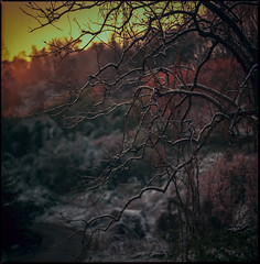 spring scenery #10 (moonchild1111) Tags: carlzeissfplanar110mmf2t hasselblad2000fc kodakportra160 6x6 negative
