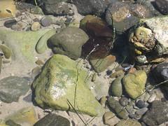 Crab between the rocks (rasputina2) Tags: leocarillostatebeach tidepool crab
