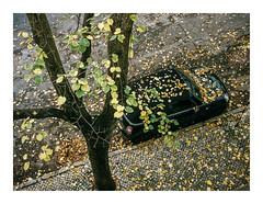 Estrela, Lisboa (Sr. Cordeiro) Tags: autumn folhas portugal leaves car fuji lisboa lisbon estrela carro fujifilm outono x100f