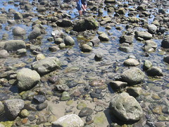 Tidepool (rasputina2) Tags: leocarillostatebeach tidepool
