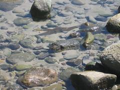 Tidepools (rasputina2) Tags: leocarillostatebeach tidepool