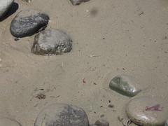 Sculpin (rasputina2) Tags: leocarillostatebeach sculpin fish tidepool