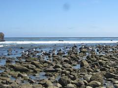 Birds over the tide pools (rasputina2) Tags: leocarillostatebeach surf tidepool bird seagull