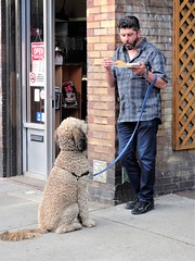 A Man and His Dog (knightbefore_99) Tags: commercialdrive car free day eastvan vancouver 2019 sunny thedrive italian italy dog chien perro hungry poodle cute sit