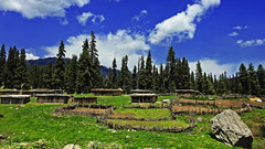Nagin valley !! (Lopamudra !) Tags: lopamudra landscape lopamudrabarman lopa kashmir kasmir sky skyscape nagin valley vale himalaya himalayas highaltitude highland india jk gulmarg clouds cloud green verdant azure tree trees trek trekking beauty beautiful colour color colours colourful cold nature loc village hamlet civilisation civilization habitat picturesque