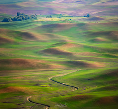 Curves (Hilton Chen) Tags: colfax steptoebutte washingtonstate curves green landscape leadinglines palouse redbarn spring sunset wheatfields