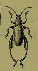 This image is taken from Page 8 of The Fauna of British India, including Ceylon and Burma [electronic resource] (Medical Heritage Library, Inc.) Tags: india ceylon burma entomology beetles lshtmlibrary ukmhl medicalheritagelibrary europeanlibraries date1906 idb2135277x0002