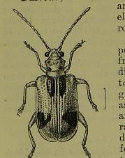 This image is taken from Page 52 of The Fauna of British India, including Ceylon and Burma [electronic resource] (Medical Heritage Library, Inc.) Tags: india ceylon burma entomology beetles lshtmlibrary ukmhl medicalheritagelibrary europeanlibraries date1906 idb2135277x0002