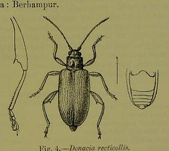 This image is taken from Page 11 of The Fauna of British India, including Ceylon and Burma [electronic resource] (Medical Heritage Library, Inc.) Tags: india ceylon burma entomology beetles lshtmlibrary ukmhl medicalheritagelibrary europeanlibraries date1906 idb2135277x0002