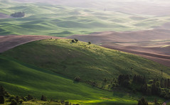 Spreading Dawn (fotostevia) Tags: easternwashington palouse palousehills steptoe steptoebutte agriculture wheat wheatfields